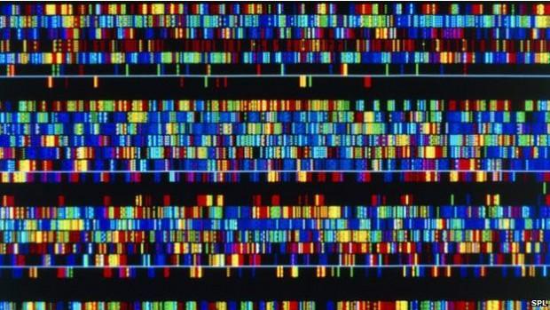 141204161837_genetic_africa_624x351__nocredit