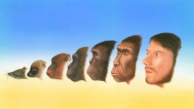 insan evrim