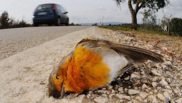 Trafik-Kuş