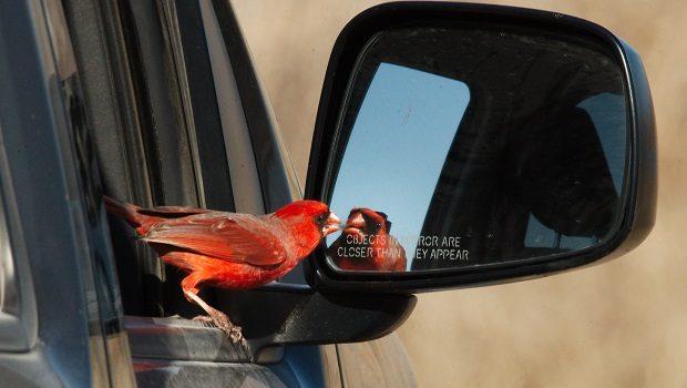 kuş ve trafik
