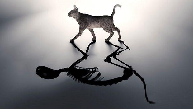 Schrodingerin-kedisi