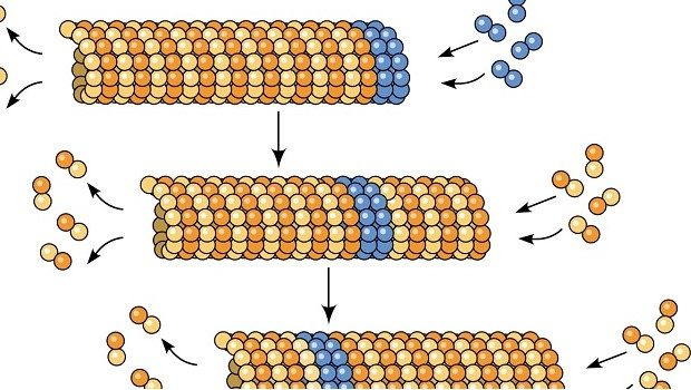 Mikrotübül